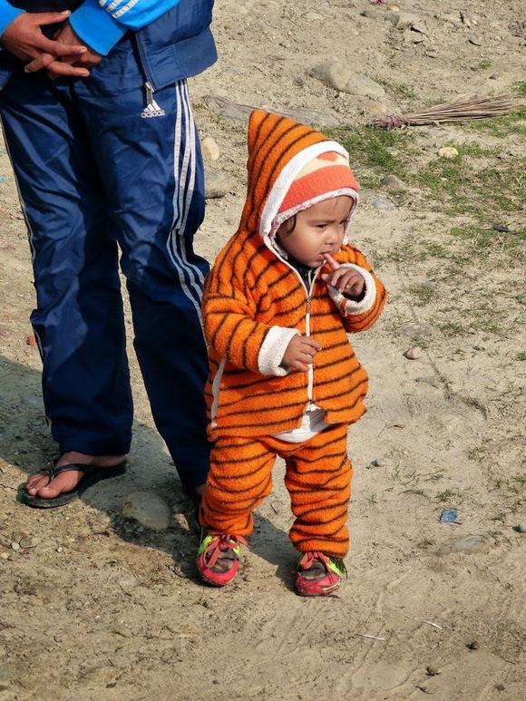 un drôle de tigre
