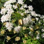 Biodiversité sur le site