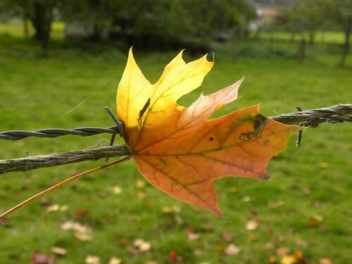 Pour Lydie...mon arbre préféré