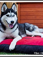 Mishka (19 mois)