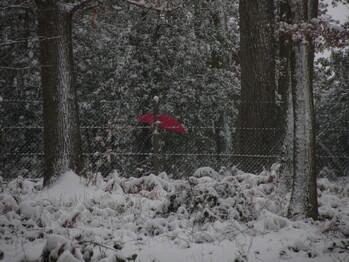 Coucou du haïku : Neige, tempête