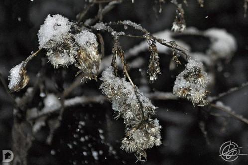 0124_neige_01.jpg