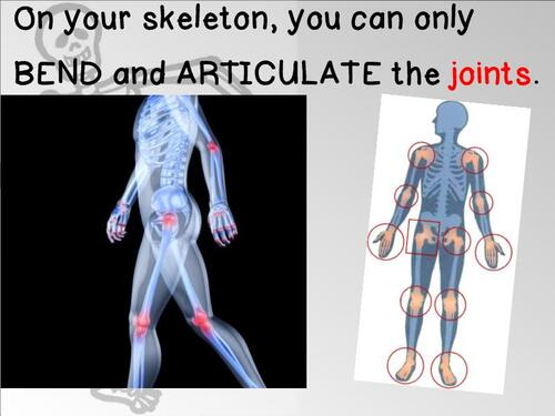 CE2SC - The SKELETON Joints