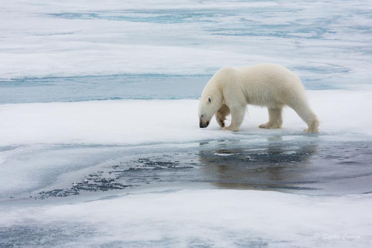 L'ours du 8 août, suite... et fin... si si !