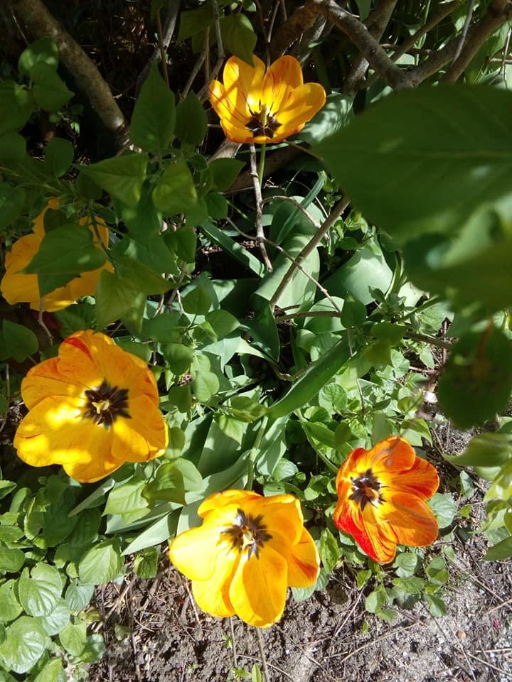 L'image contient peut-être: fleur, plante, nature et plein air