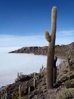 Bilan Bolivie