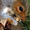 hyde-park---squirrel-13.jpg