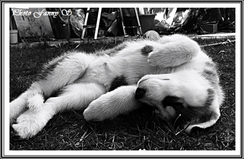 La sieste, c'est sacré (2 juin 2016)