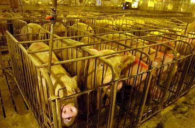 Faune en établissement Animalier