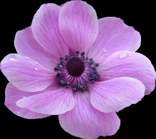 Fleurs Têtes Série 12