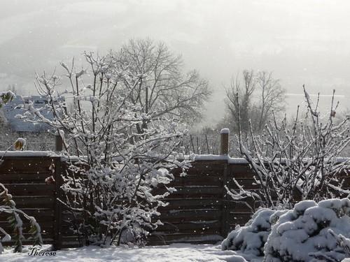 Première neige 26-27 novembre 2011 (5)