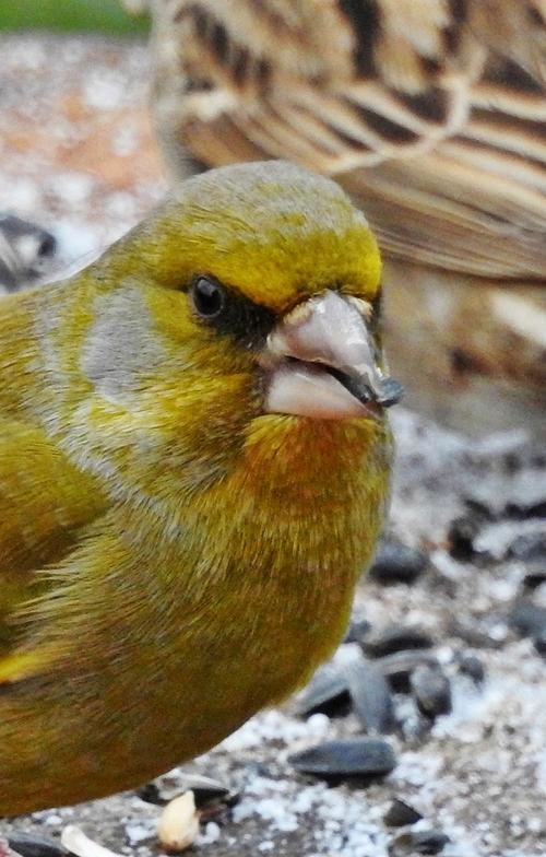 Oiseaux au jardin hier matin