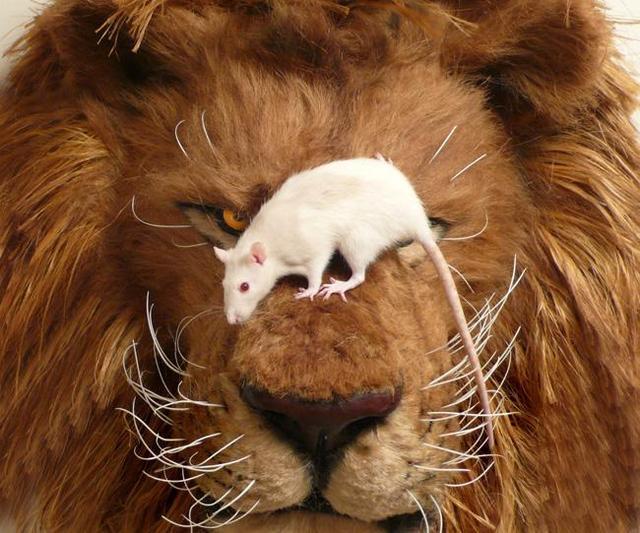 Le lion et le rat blog du prasmel - Image le lion et le rat ...