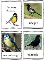 Des noms d'oiseau !
