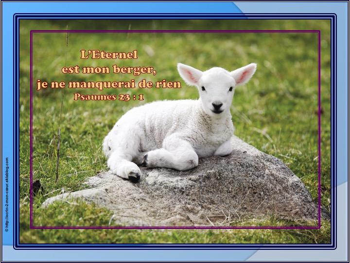 L'Eternel est mon berger - Psaumes 23 : 1
