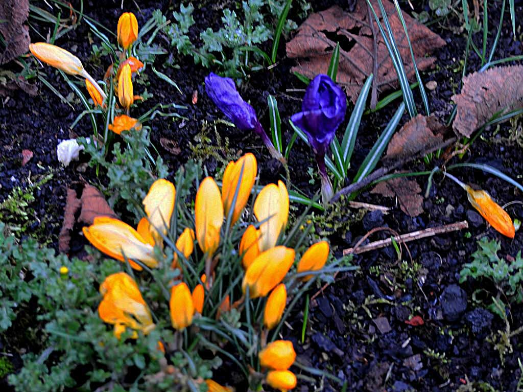 Les fleurs de mon jardin!