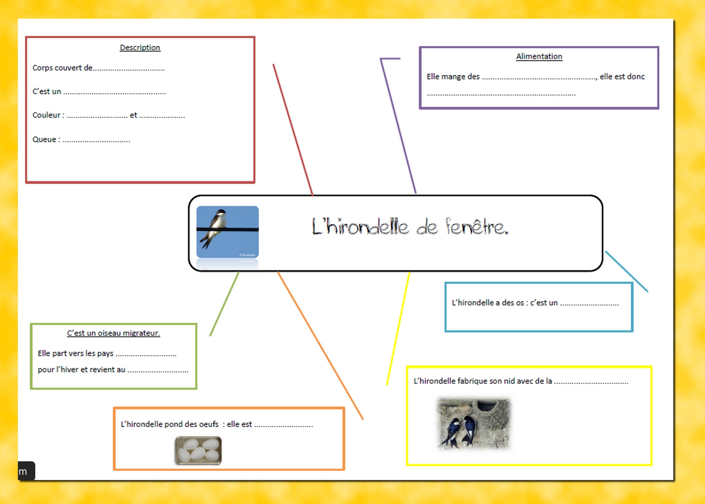 presentation hirondelle carte