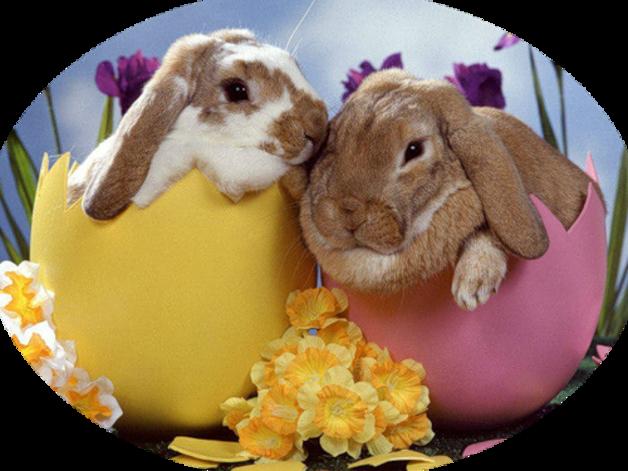 Lapinous de Pâques