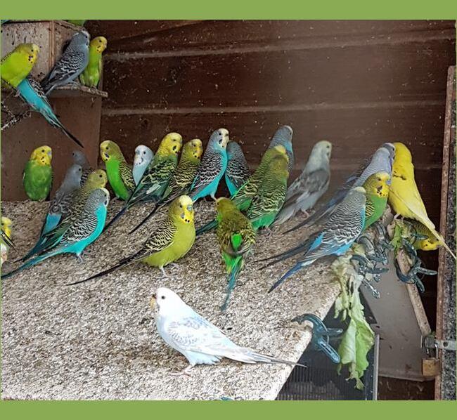 Chez Nadia:divers oiseaux