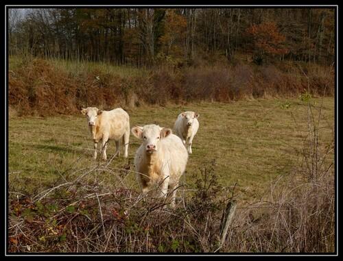 Balade en Limousin