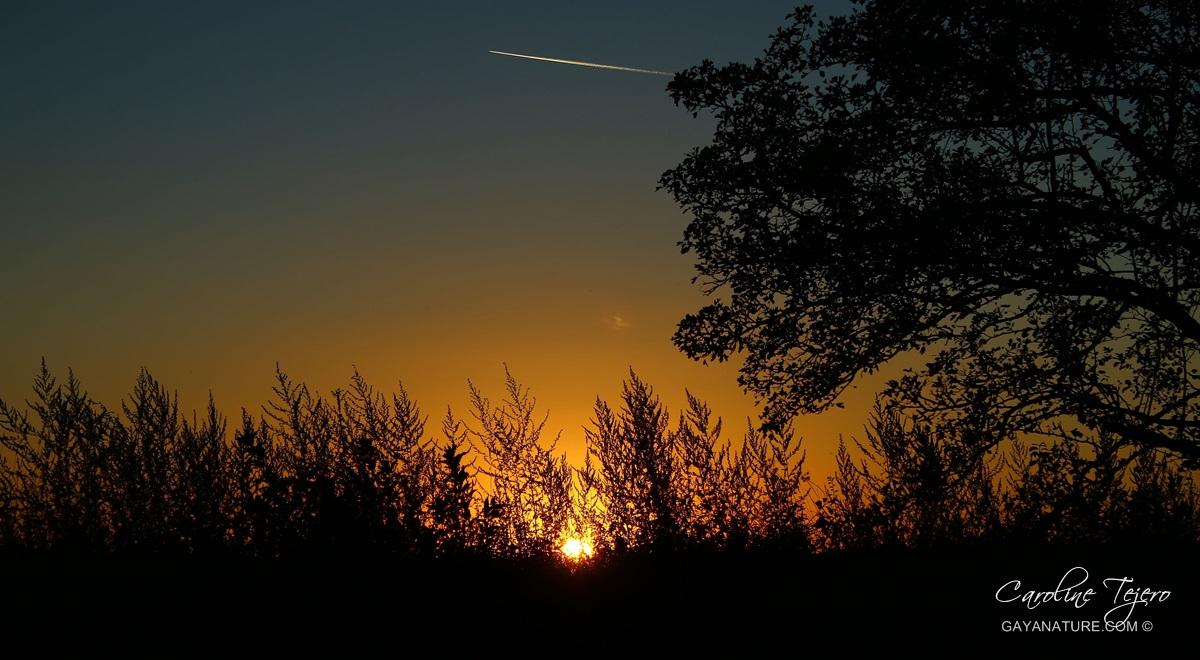 Coucher de soleil en bord de Loire