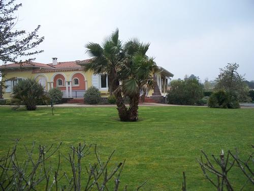 beaux palmiers