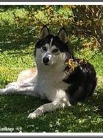 Laïdja (2,5 ans)