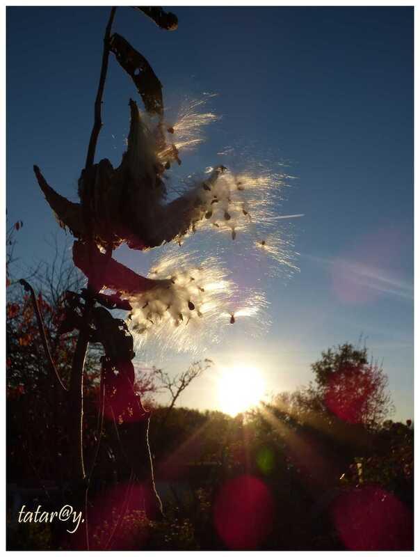 Perruches ...... dans le vent !....
