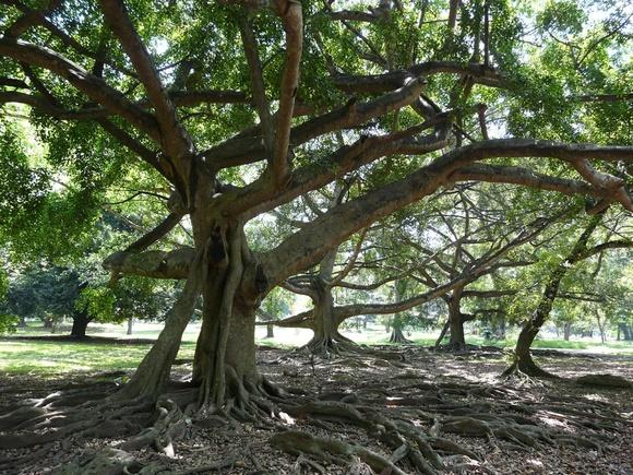 un arbre aux formes originales;