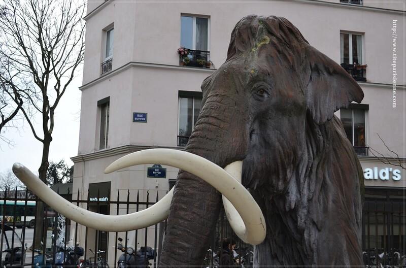 Un mammouth à Paris !