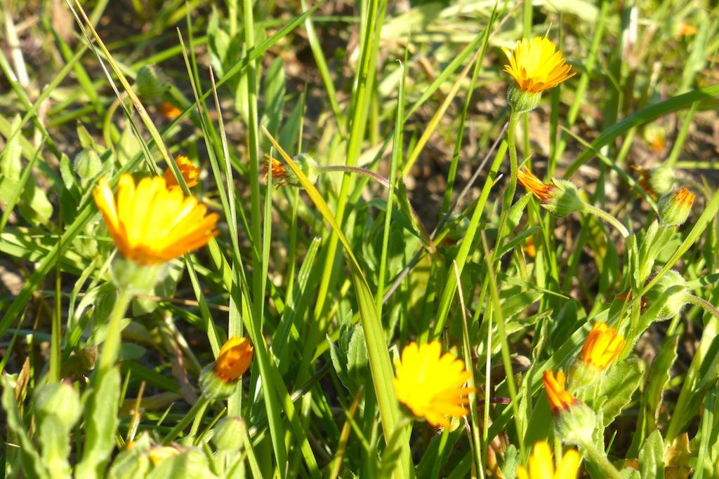 Le printemps nous offre ses fleurs!