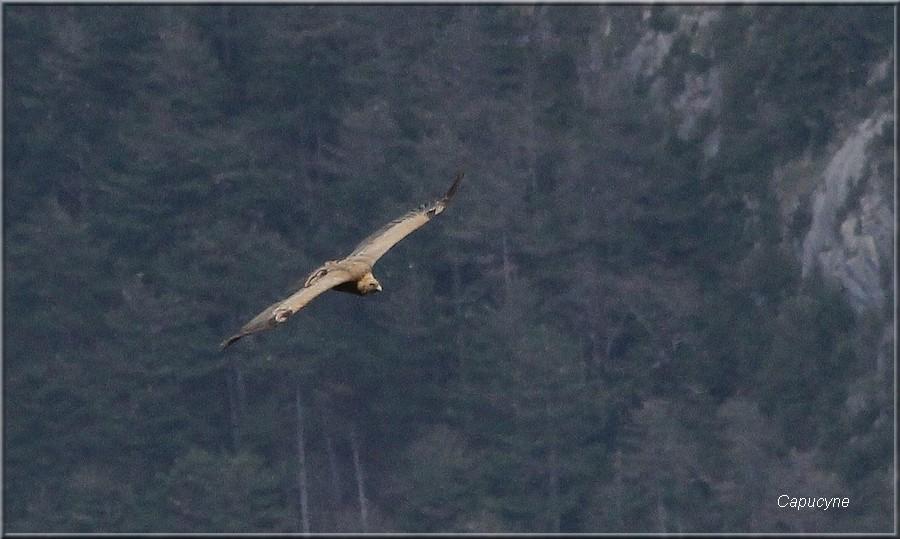Dans les Hautes-Pyrénées : 4 -rencontres animales