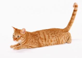 Le chat qui vivait haut