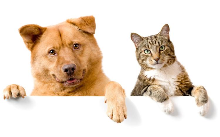 Le meilleur pour chiens et chats
