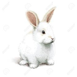 Le lapin blanc.