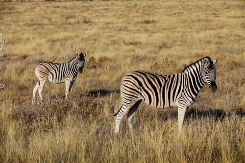 Patrimoine mondial de l'Unesco : Mosi-oa-Tunya -  les chutes Victoria - Zambie-Zambèze