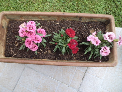 quelques fleurs de mon jardin