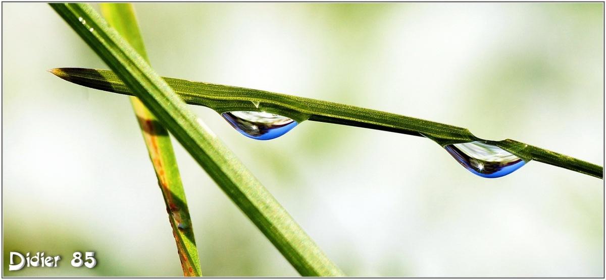 Goutte d'eau (2)