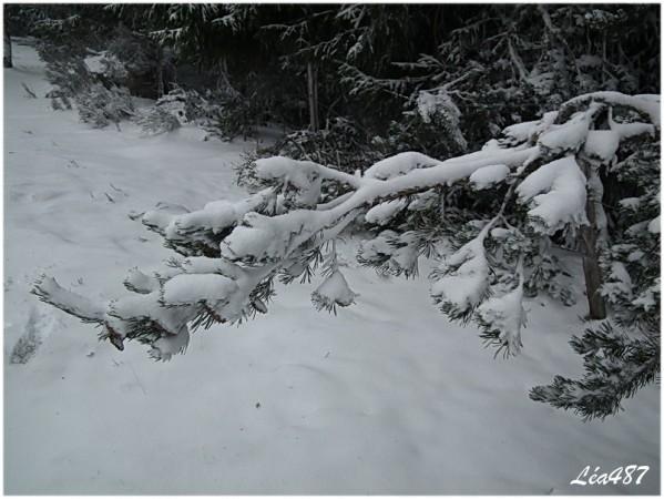 DSCF1843-branche-neige.jpg