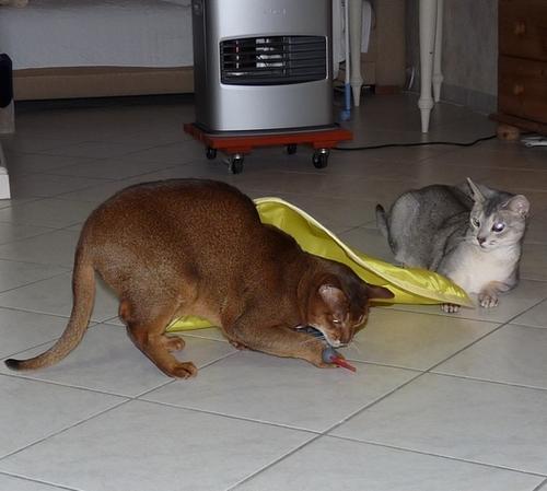 Le chat et la souris ......