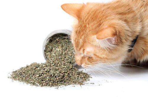 Guide pratique sur la médecine alternative pour animaux