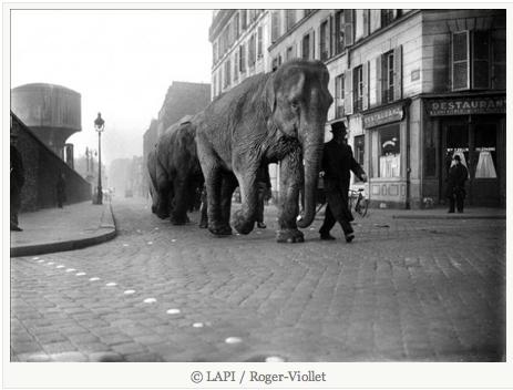 Éléphants parisiens