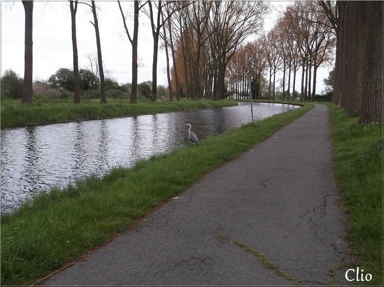 Le canal de Roubaix le soir ...Rencontre avec un héron.