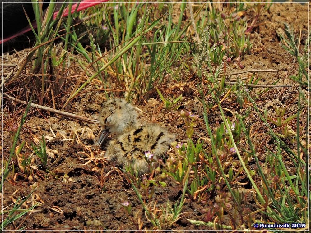 Réserve ornitho du Teich - Mai 2015 - 8/10