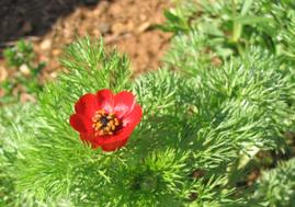 Découvrez les Causses fleuris en Aveyron
