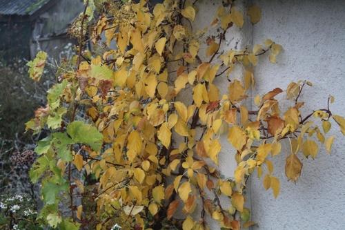 C'est maintenant sûr, l'automne est là