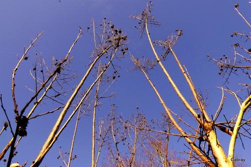 Branches d'arbres en février