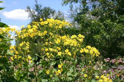 le jardin du scrabbleur - patchou blog