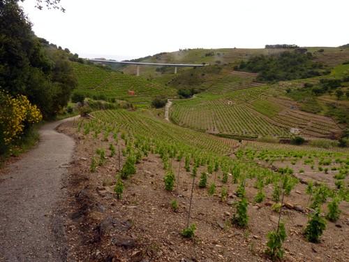 Descente parmi les vignes
