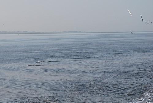 Senegal-Pointe-Sarene--Le-Sine-Saloum-Joal-Fad-copie-9.JPG